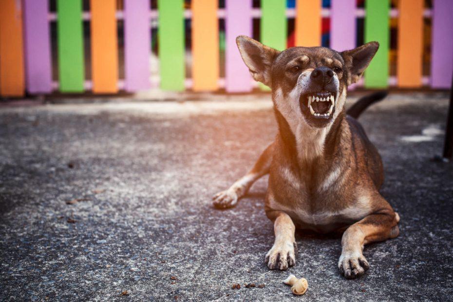 Che differenza c'è tra un cane da guardia e un cane da difesa